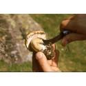 Mushroom Knife 7,5 cm