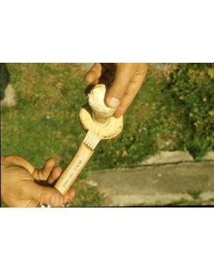 Coltello Cogli Funghi 7,5 cm