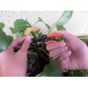 """Forbici Multiuso """"Dita Libere"""" per Giardinaggio, Bonsai, Raccolta Frutta e Verdura 12 cm"""